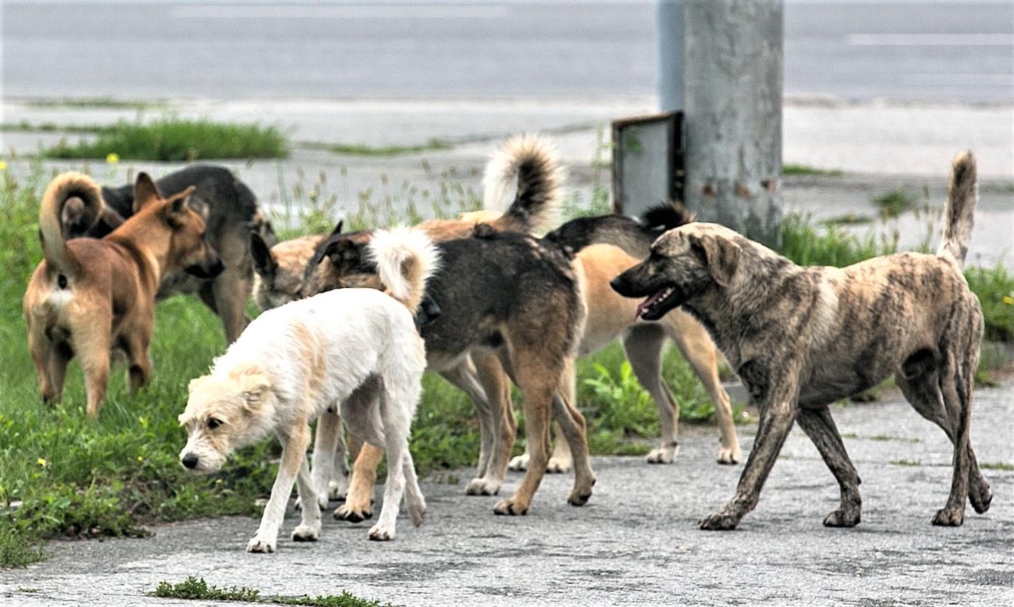 Внимание, отлов безнадзорных животных!