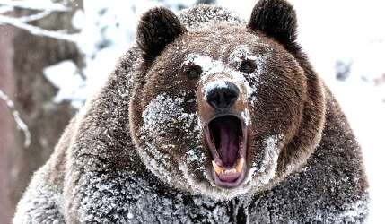 В лесной деляне медведь задрал человека
