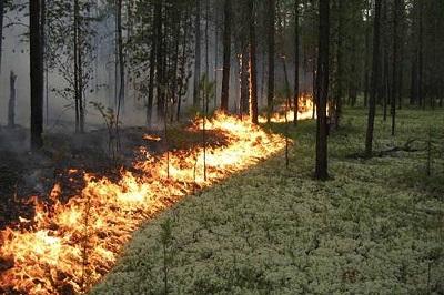 В районе ликвидирован  третий лесной пожар