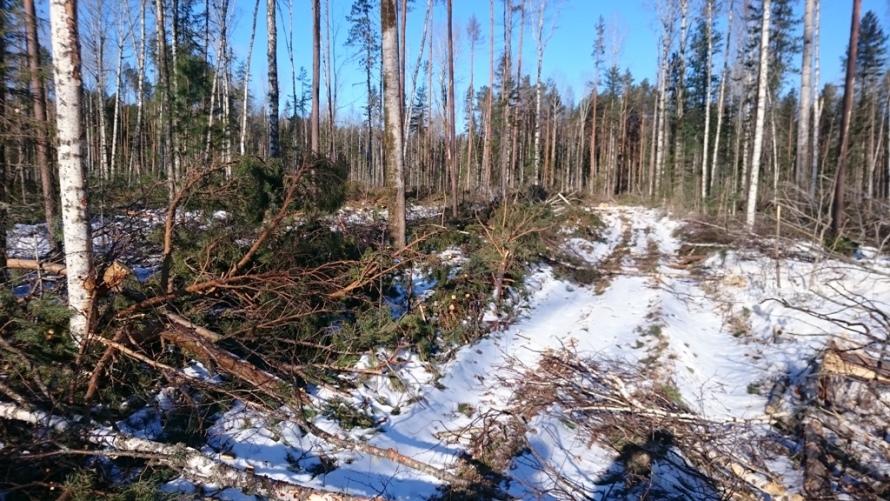 Прокуратура Чунского района понуждает арендаторов к очистке лесных участков от порубочных остатков