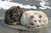 За год отловят 112 безнадзорных собак