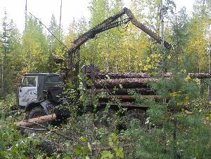 В Усть-Илимском районе полицейские пресекли незаконную рубку леса