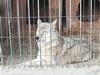 Администрация района проверила условия содержания отловленных собак