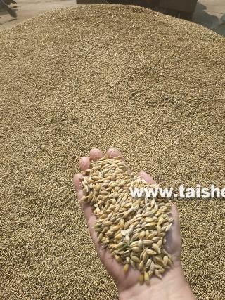 Продолжается уборка зерновых культур