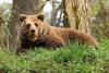 В районе разрешен отстрел тридцати медведей