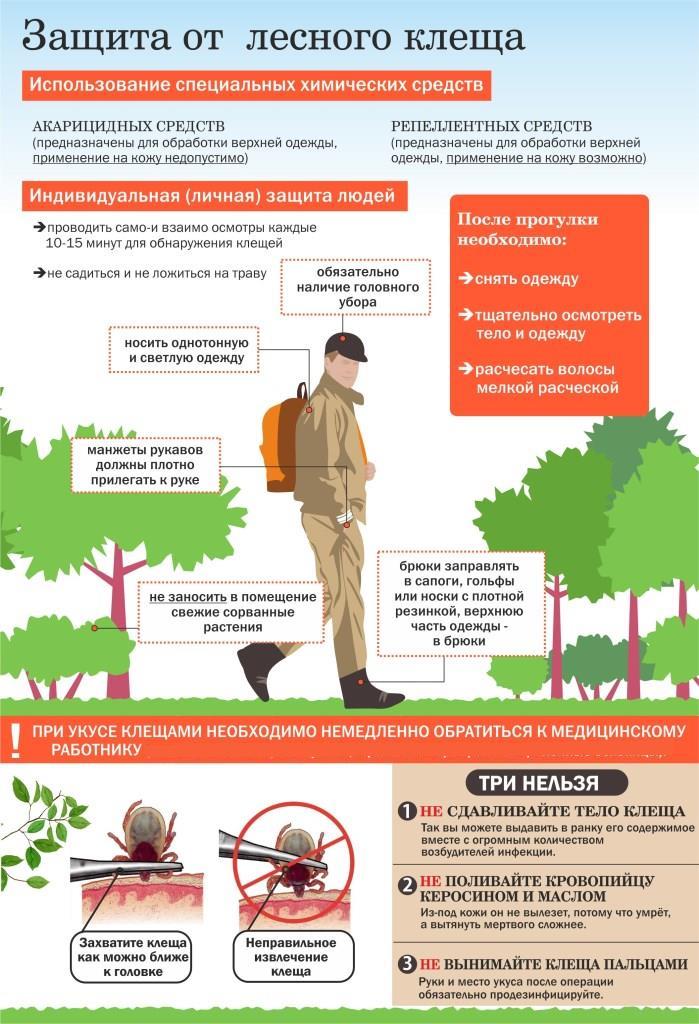 Памятка: защита от лесного клеща