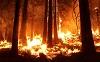 Лесопожарная обстановка в районе остается стабильной