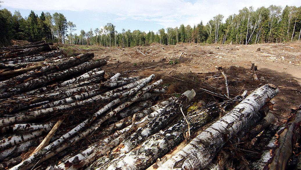 В Иркутской области заработала система для борьбы с незаконными рубками леса