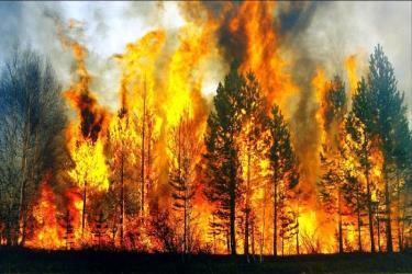 Количество лесных пожаров приблизилось к тридцати