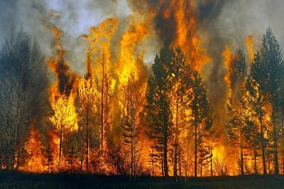 В районе зарегистрирован первый лесной пожар