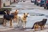 Служба ветеринарии Иркутской области призывает граждан не бросать своих животных из-за боязни заражения коронавирусом