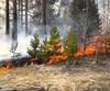 Район готовится к лесопожарному сезону