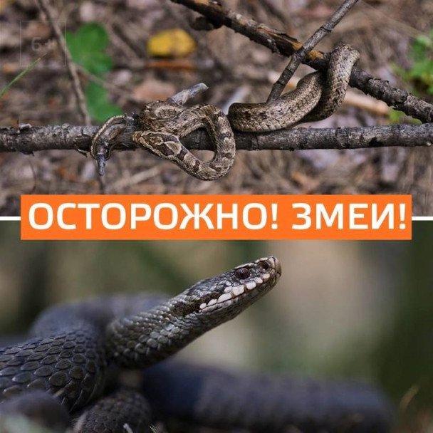 Осторожно! Змеи!
